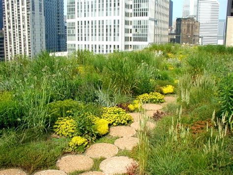 roof garden plants greenroofs com projects chicago city hall