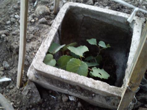 membuat pupuk kompos sederhana  media tanaman