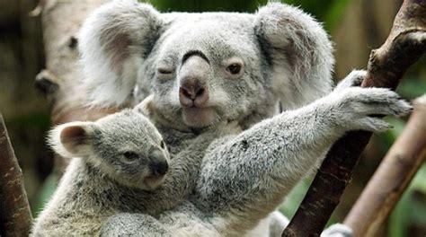 fotos animales mamiferos informaci 243 n sobre los animales mam 237 feros toda la