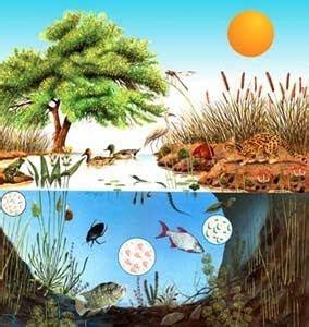 biología y geología. secundaria.: organización jerárquica