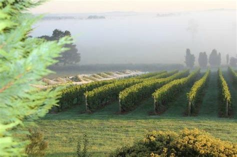 cherry tree hill cherry tree hill vineyard sutton forest australia top tips before you go tripadvisor