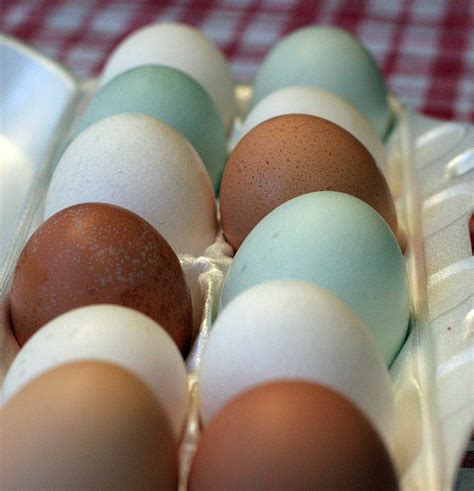 chickens that lay colored eggs perks laying hens colored eggs and hens