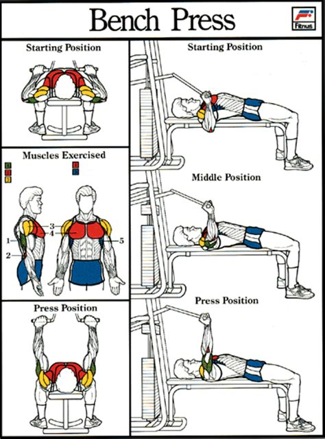 muscle groups used in bench press bench press