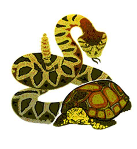 wallpaper animasi ular bergerak ular gif gambar animasi animasi bergerak 100 gratis