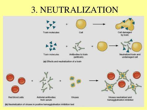 explain the antigen antibody reaction diagram pics for gt antigen antibody reaction diagram