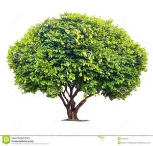 tree photos big tree stock image image 38303671