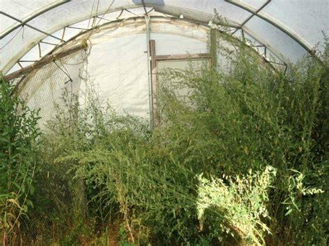 growing food year    greenhouse