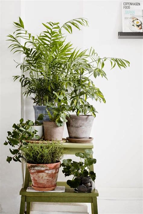 indoor plan best 25 indoor plant stands ideas only on pinterest