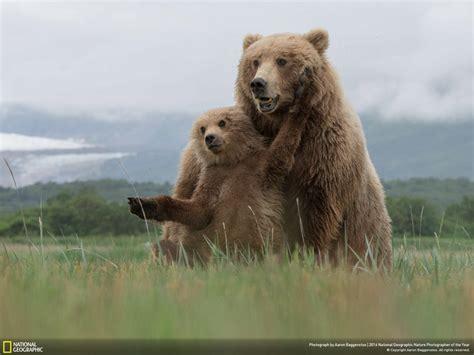 Nature S Plus Prost Actin 30s les plus beaux portraits d animaux du national geographic