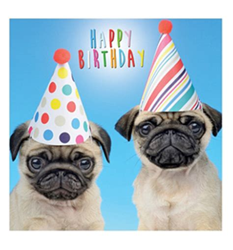 Birthday Pug Meme - pug puppies in hats birthday card i love pugs