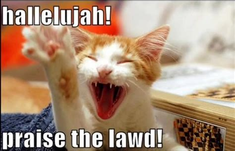 Praise The Lord Meme - hallelujah lol cats pinterest the o jays lol and kitty