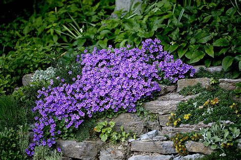 Plants For A Rock Garden Create A Faux Rock Garden On A Hillside Or Berm Pennsylvania Gardener Web Articles