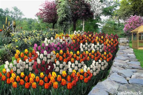 Tulipia Set Rok tulip garden designs vegetable garden