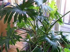 house plant types house photo tropical plants indoor house plants managing your in house greens