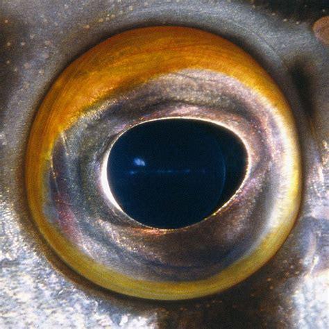 fish eye fish dos en bertie winkel