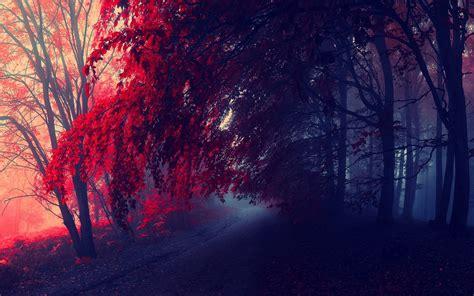 red autumn desktop pc  mac wallpaper