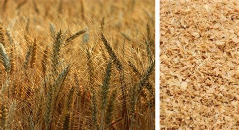 whole grains testosterone the 6 best testosterone boosting foods