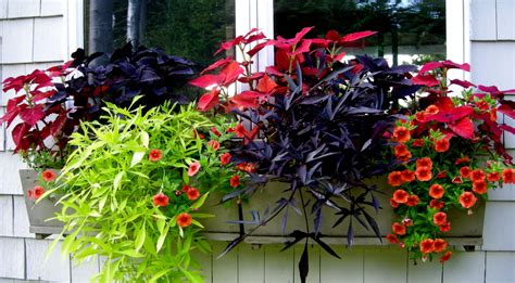 flowers for window boxes in partial shade colorful annuals for shade carolyn s shade gardens