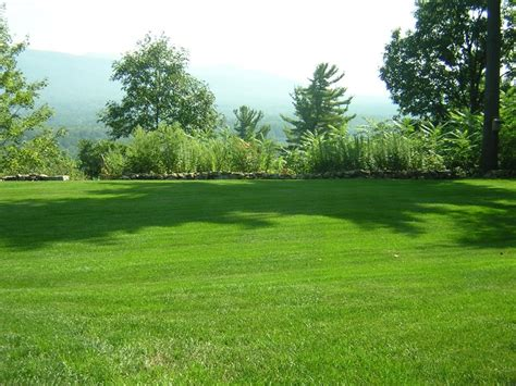 how to choose grass lawn alternatives froodee