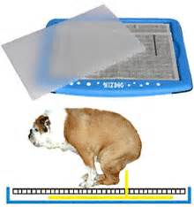 how to potty dogs indoors wizdog indoor potty review home