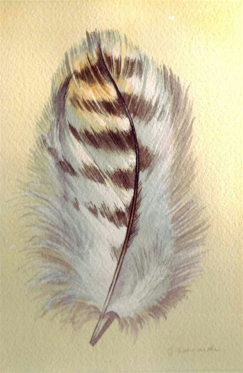 hawk feather tattoo hawk feathers tattoos pictures to pin on