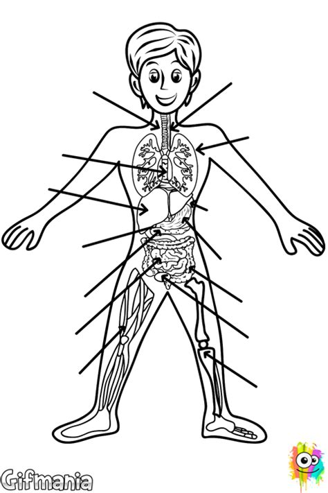 internal organs of human body coloring pages coloring pages