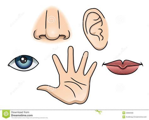 imagenes sensoriales en ingles free coloring pages of los cinco sentidos