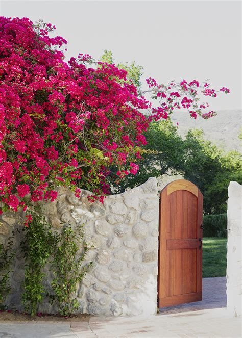 bougainvillea  design ideas remodel  decor lonny