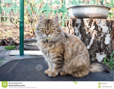 chat dans le jardin photo stock image 55426262