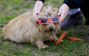 dogs eclipse did easyjet flight from manchester get the best view of the solar eclipse daily