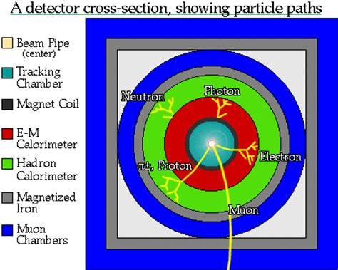 cross section particle physics the particle adventure how do we interpret our data