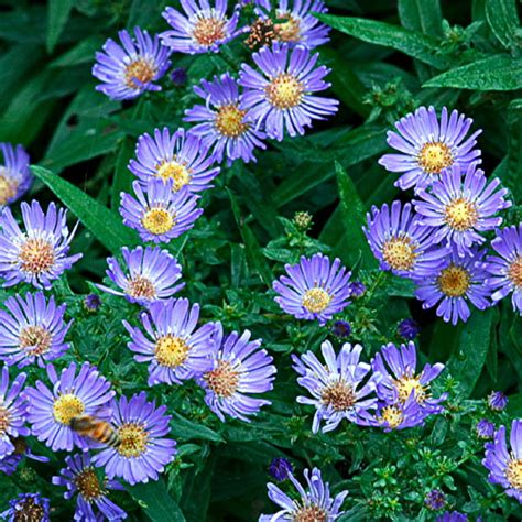 summer flowers the most popular blooms for every month 9 easy summer flowers sunset magazine