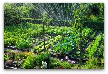 organic vegetable garden planning tips ideas