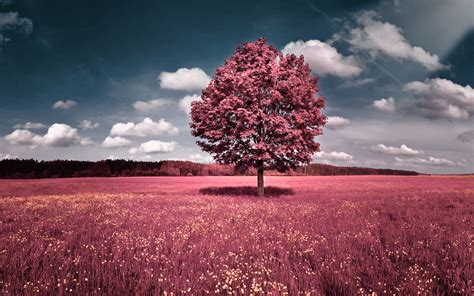 wallpaper pink full hd pink full hd desktop wallpaper wallpaper high