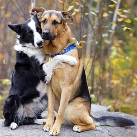 two dogs check out these sweet dogs who just to hug each other doggies care
