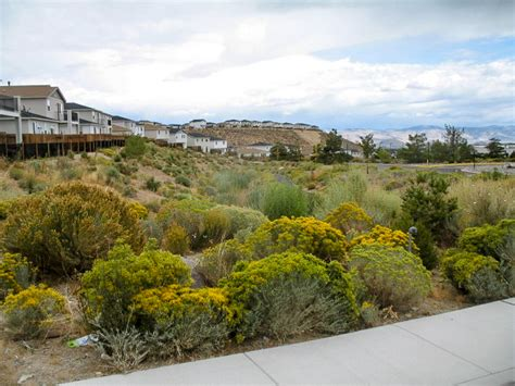 Landscape Architect Reno Events At The River School Farm In Reno Nevada River