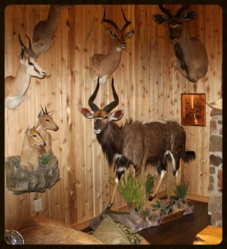 trophy room taxidermy trophy taxidermy and antler trophy room 2
