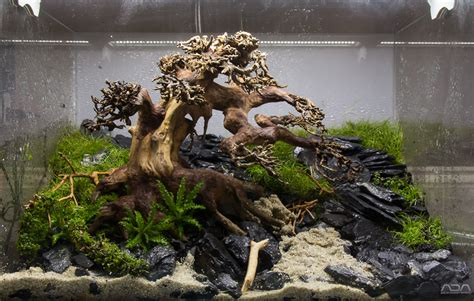 aquascape volcano the planted tank forum view single post from this to
