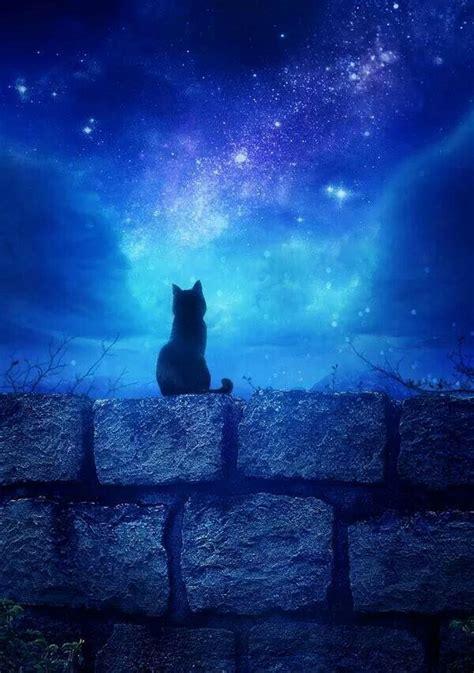 Starry Nite starry starry nite cat katzen blau