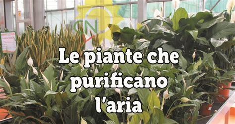piante da interno purificano l le piante purificano l casanatura vivaio