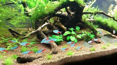 My planted tropical aquarium   YouTube
