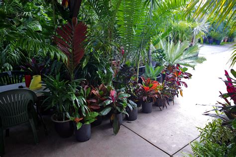 tropical plants san diego palm tree nursery san diego