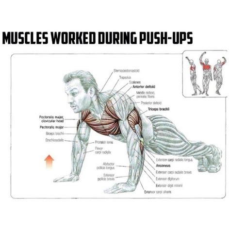 do push ups help bench press total body workout routines push ups muscles worked best