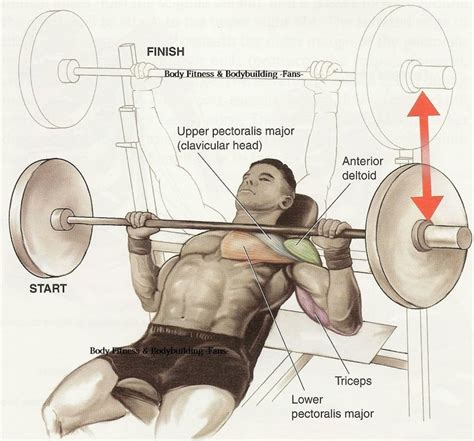 barbell incline bench press incline barbell press bod build pinterest