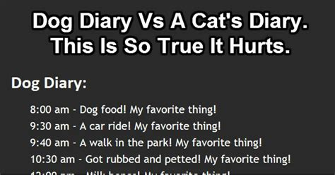diary vs cat diary diary comparison vs cat diary who said cats are evil