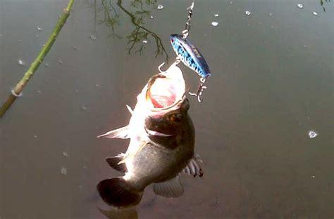mancing  sungai potenzi fishing