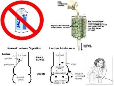 breath test al lattosio bt al lattosio studio specialistico di gastroenterologia