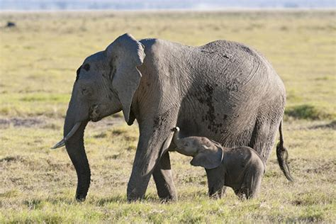 imagenes animales viviparos animales viviparos caracter 237 sticas fotos y ejemplos