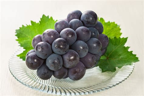 grape picking okayama prefecture official tourism guide