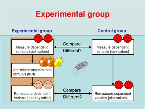 Experimental Group Design | control group exles women fatties sex
